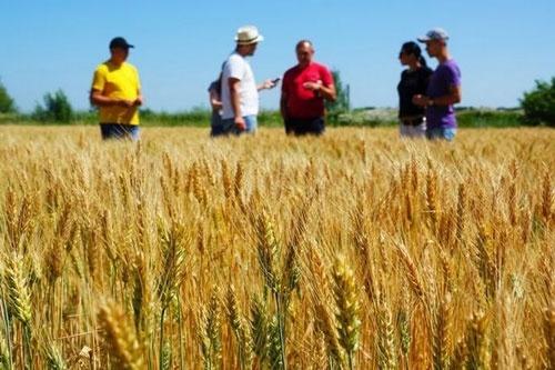 Борьбу аграриев против продажи земли олигархам и иностранцам хотят дискредитировать фото, иллюстрация