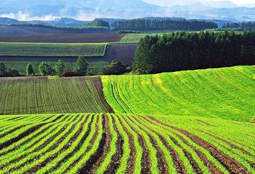 Уряд запровадить 2 програми фінансування для придбання землі, — Маркарова фото, ілюстрація