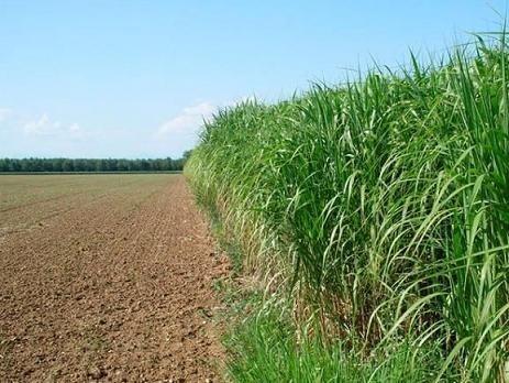 В Україні 4 млн га малородючих земель, де можна вирощувати енергетичні культури фото, ілюстрація