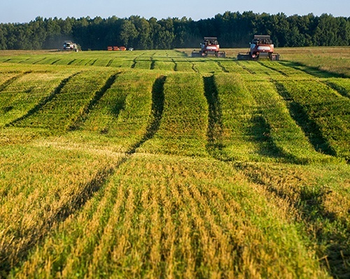Оренда сільгоспземель в Україні зросла на 50% фото, ілюстрація