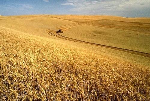 Экспорт зерна и масличных нового урожая достигнет 57 млн тонн, - УЗА фото, иллюстрация