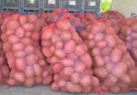 Як називають картоплю в різних регіонах України? фото, ілюстрація
