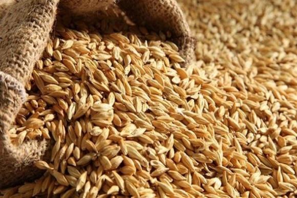 Індонезія посилює  вимоги на імпорт української пшениці фото, ілюстрація