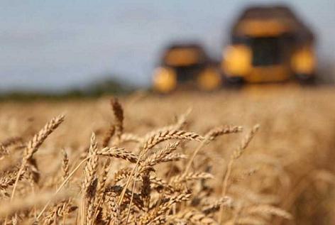 Хлібороби Рівненщини сіють озимі під врожай 2020 року фото, ілюстрація