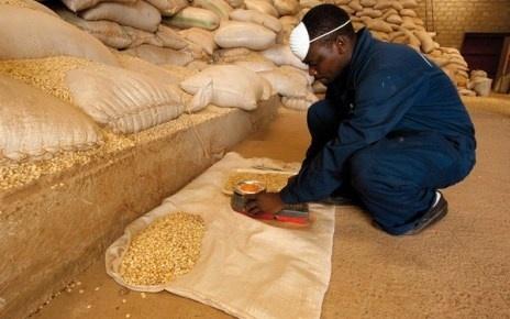 Ефіопія зацікавлена в поставках зерна з України фото, ілюстрація