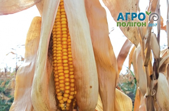 Відбудеться агротехнологічний форум «Кукурудза. Архітектура собівартості. Тест 2017» фото, ілюстрація