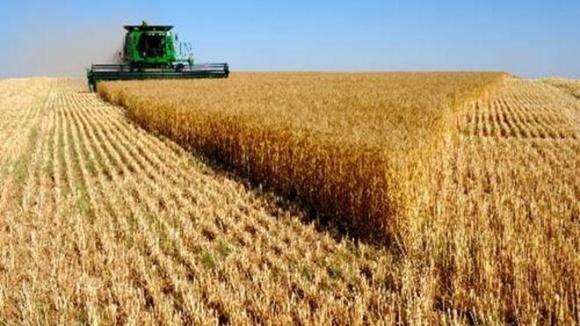 В Австралии очередная засуха может привести к снижению урожая пшеницы в 2018/19 МГ фото, иллюстрация