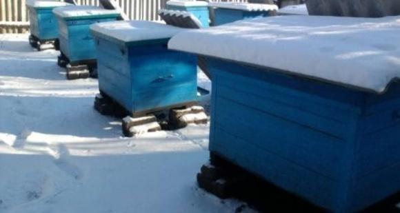 Пчеловоды обеспокоены последствиями затяжной зимы фото, иллюстрация