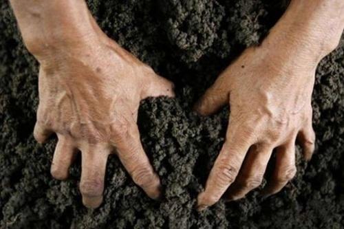 Чиновників НААН підозрюють у розкраданні 15 га землі під Києвом, - НАБУ фото, ілюстрація