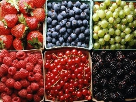 Ассоциация производителей фруктов в Польше призывает прервать и не собирать урожай мягких фруктов фото, иллюстрация