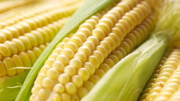 Китайські імпортери переключаються з американської кукурудзи на українську фото, ілюстрація