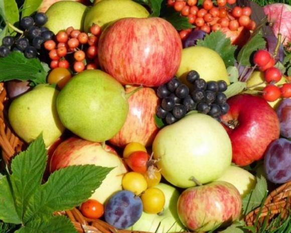 Експорт плодово-ягідної продукції зріс на 59% фото, ілюстрація