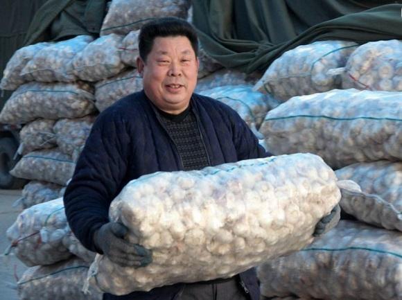 Китай зібрав безпрецедентний врожай часнику фото, ілюстрація