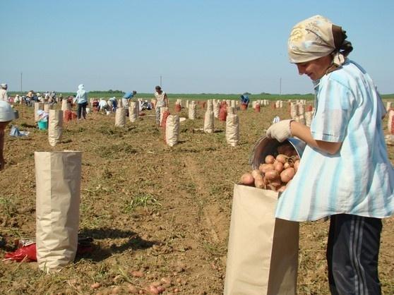 В Украине в прошлом году появилось 455 новых фермерских хозяйств фото, иллюстрация