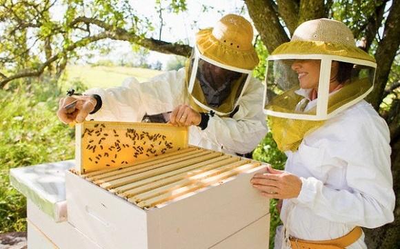 Госпродпотребслужба, фермеры и пчеловоды подписали меморандум по защите пчел от внесения пестицидов фото, иллюстрация