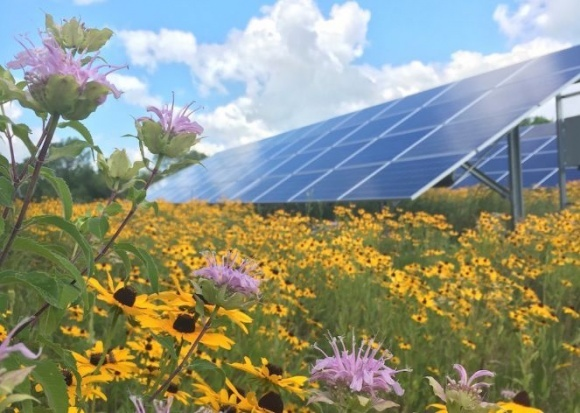 В США пчеловоды начали стоить пасеки на солнечных электростанциях фото, иллюстрация