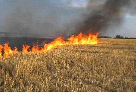 Ученые напоминают о недопустимости сжигания растительных остатков фото, иллюстрация