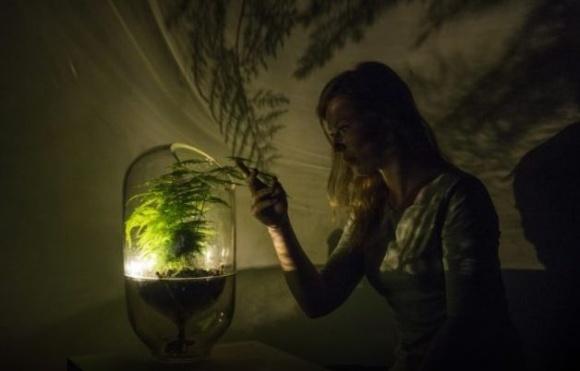 Голландський стартап: перетворення рослин на батареї фото, ілюстрація
