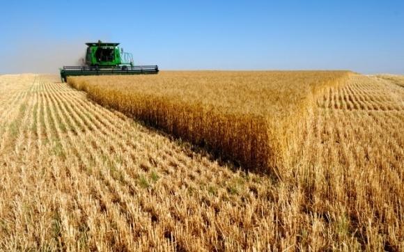 В Украине собрали 20 млн тонн зерна фото, иллюстрация