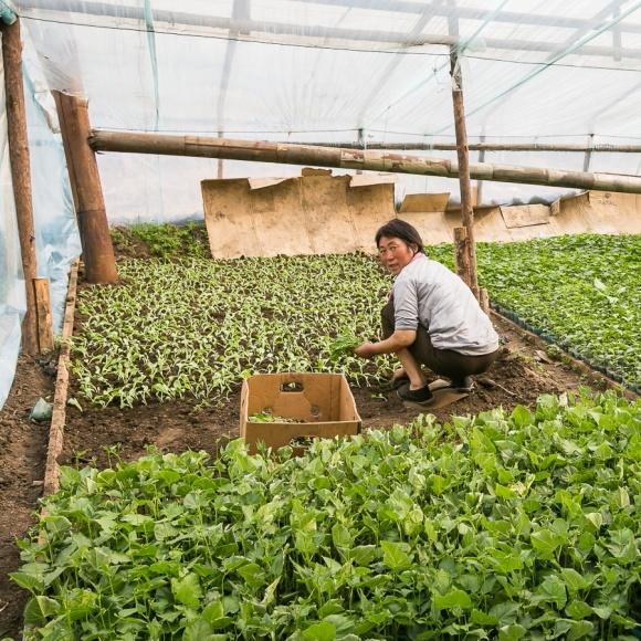 Китайский овощной бум: зачем в Крым пригласили инвесторов из КНР фото, иллюстрация