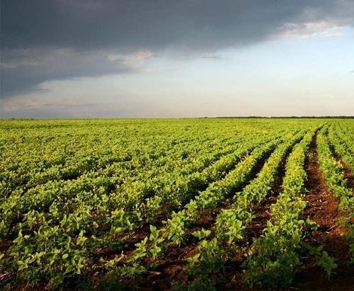 Євростат оприлюднив рейтинг країн ЄС за площами органічних сільгоспугідь, - НААН фото, ілюстрація