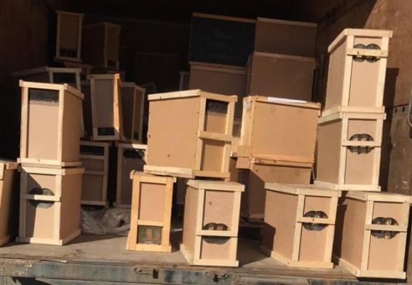 «Укрпошта» про загибель 8 млн бджіл: це вперше і винна погода фото, ілюстрація