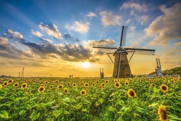 «Аграрный фонд» в 2018 запустит собственную мельницу фото, иллюстрация