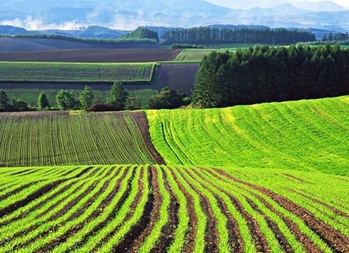 Почему рынок земли не заработает до 2021 года? фото, иллюстрация