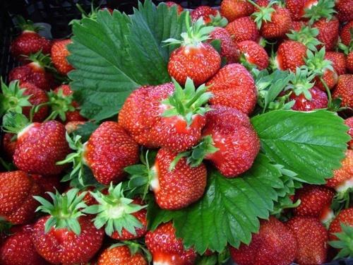 На текущей неделе на юге Украины ожидается обвал цен на землянику садовую (клубнику) фото, иллюстрация
