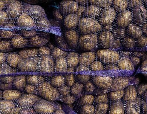 Україна за вересень імпортувала більше картоплі, ніж будь-коли в історії за рік фото, ілюстрація
