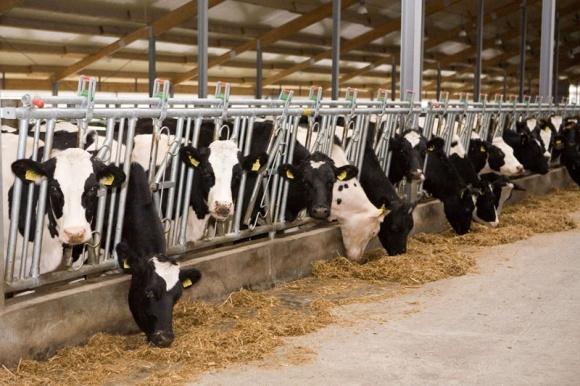 Крупнотоварные фермы увеличили производство молока фото, иллюстрация