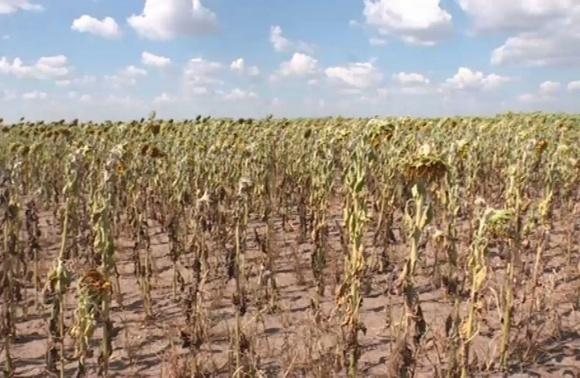 Фермеры Германии просят у правительства 1 млрд EUR помощи фото, иллюстрация