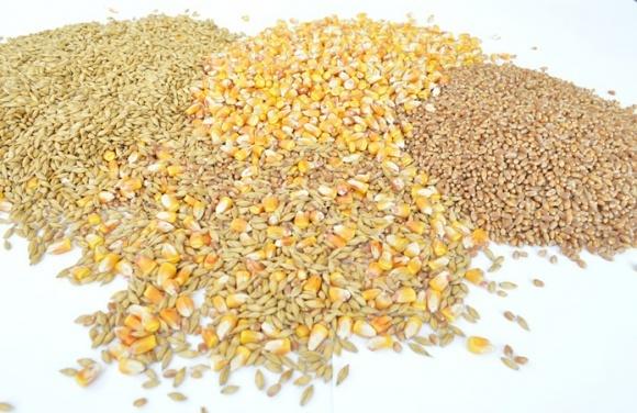 Рейтинг покупців українського зерна фото, ілюстрація