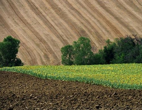 МВФ та Україна мають спільні інтереси щодо земельної реформи, – Милованов фото, ілюстрація