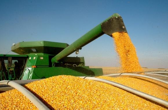 Україна збільшує експорт органічних зернових культур в Німеччину фото, ілюстрація