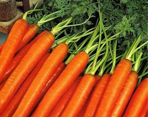 Ціна на моркву в Україні продовжує знижуватися фото, ілюстрація