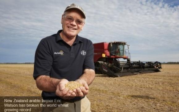 Новозеландські фермери увійшли до «Книги рекордів Гіннеса» за врожайність пшениці фото, ілюстрація