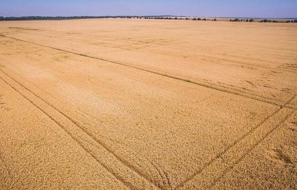 Хто володіє сільгоспугіддями в Україні? фото, ілюстрація