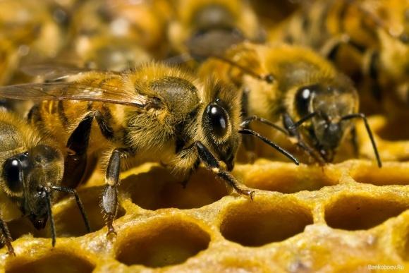 ФАО подарила донецким фермерам 150 пчелосемей фото, иллюстрация