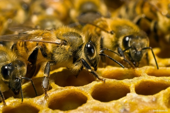 ФАО подарувала донецьким фермерам 150 бджолосімей фото, ілюстрація
