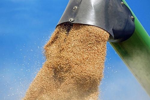 Канада експортувала в Китай найбільший обсяг пшениці за 14 років фото, ілюстрація