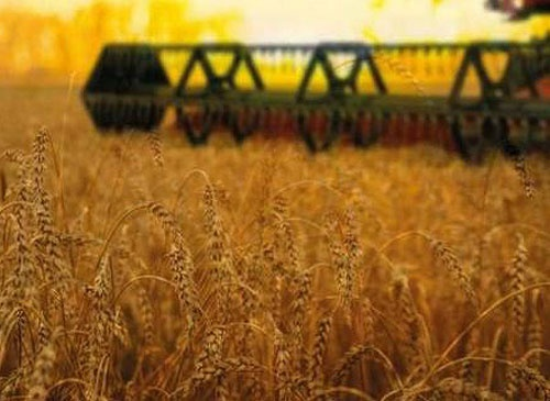 На Львовщине завершают сбор урожая поздних культур фото, иллюстрация