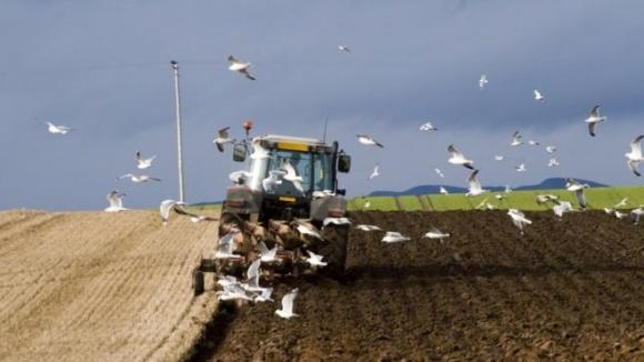 Шотландські аграрії стурбовані своїм майбутнім після Brexit фото, ілюстрація