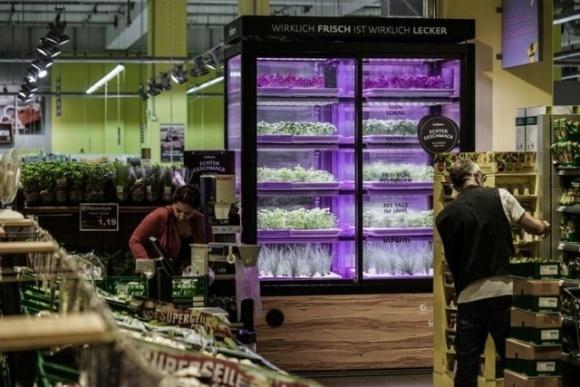 В американских магазинах устанавливают «инкубаторы» зелени фото, иллюстрация