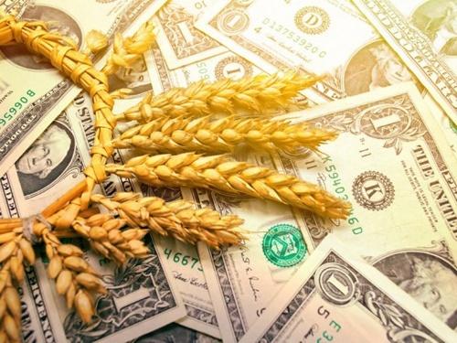 В I квартале 2019 Украина почти на четверть увеличила экспорт агропродукции – Институт аграрной экономики фото, иллюстрация