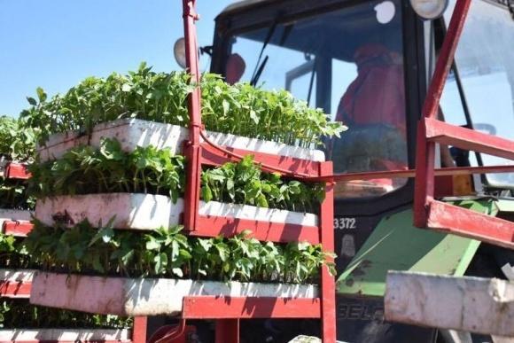 Agrofusion: майстер-клас з вирощування томатів фото, ілюстрація
