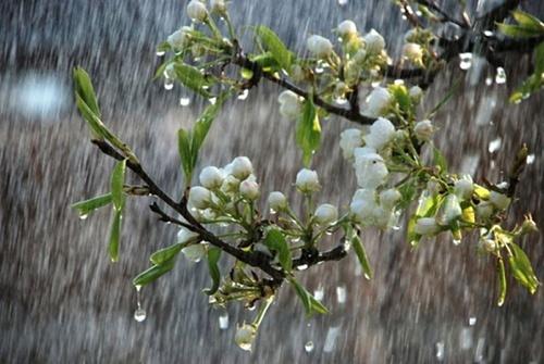 В Херсонской области плохая погода может повлиять на урожай вишни фото, иллюстрация