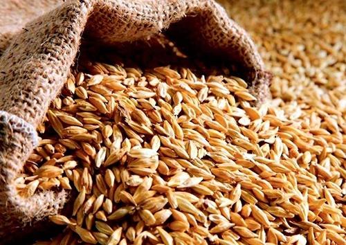 Аграрный фонд закупит зерна по форварду на 2.5 млрд грн фото, иллюстрация