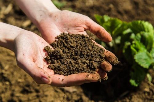 Україна займає 11 місце в Європі за площею органічних земель фото, ілюстрація