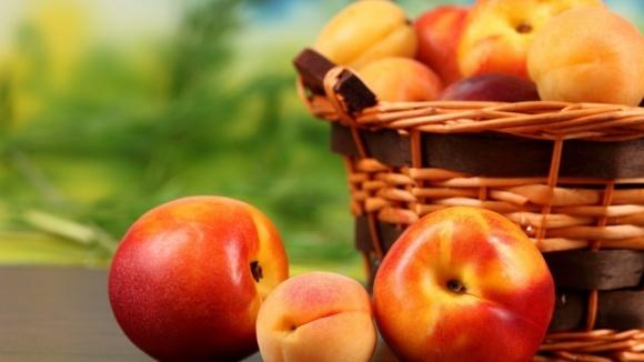 Украина теряет возможность выращивать абрикос и персик, под угрозой - черешня, - FАО фото, иллюстрация